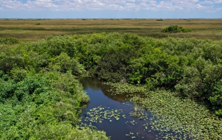 freshwater-wetlands