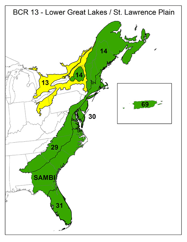 Bird Conservation Regions Atlantic Coast Joint Venture - Map of us atlantic coast