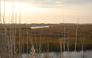 Coastal habitat in Delaware. Photo courtesy of Kevin Kalasz