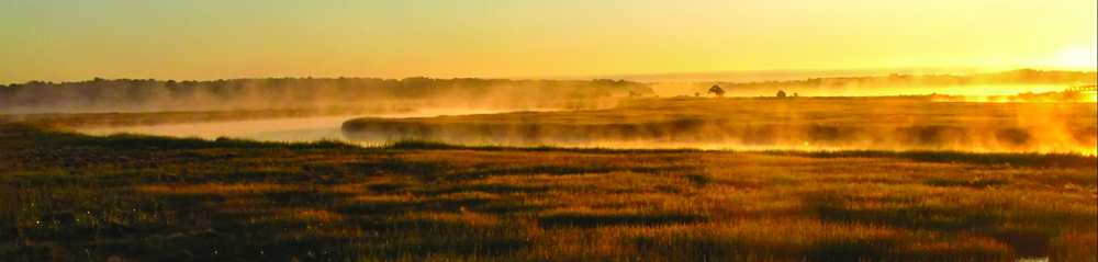 Mist rising from saltmarsh. Keith Carver