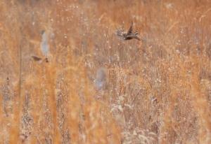 Flight. Photo courtesy of SCBI