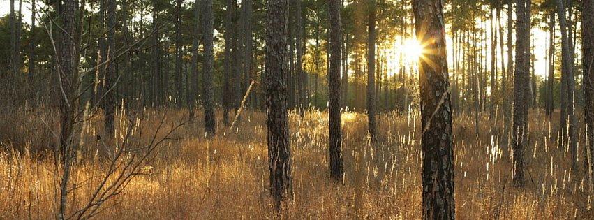 Good bobwhite habitat. Photo courtesy of SCBI