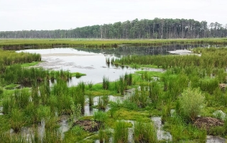 Blackwater national Wildlife Refuge. Photo by wagon16, Creative Commons