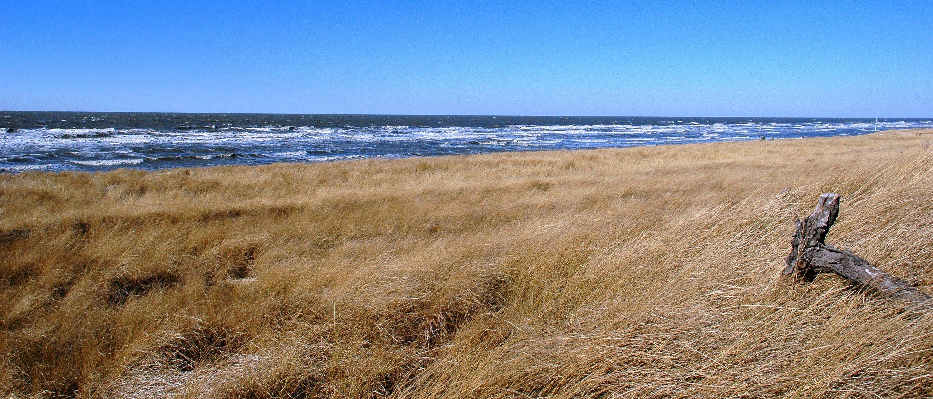 Delaware Bay. David Slack